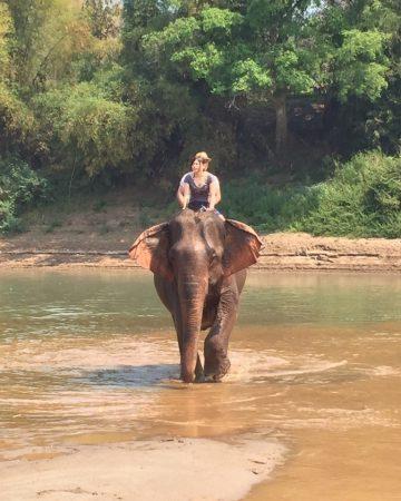 象使いライセンス取得