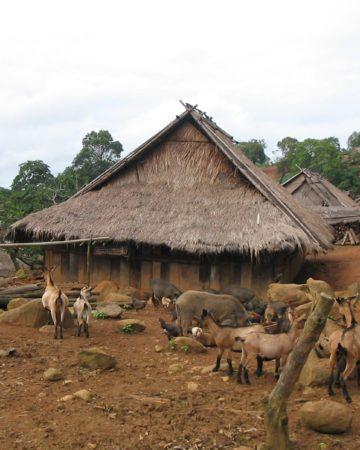 少数民族の村にホームステイ
